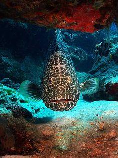 Cozumel, Mexico.  Big fish!