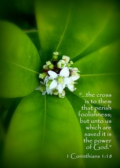 """""""For the word of the cross is folly to those who are perishing, but to us who are being saved it is the power of God."""" 1 Corinthians 1:18 ESV"""
