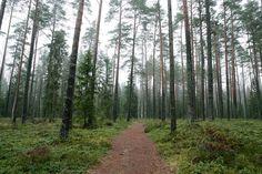 :: Selli pine wood. Alam-Pedja, Estonia - © Arne Ader / Loodusemees