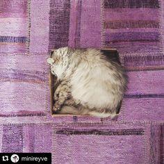 Zo'n lieve foto!!!!:heart_eyes::heart_eyes::heart_eyes::heart_eyes: #Repost @minireyve with @repostapp. ・・・ Plus le carton est petit mieux c'est #instabouledepoil #instacat #sukhi   #minireyve #Sukhi #patchwork #turkije #cat #kat #huisdier #schattig   www.Sukhi.nl   @sukhi_nl