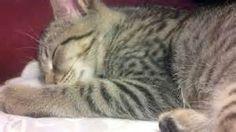 catstuff - Bing images