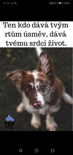 Anniversary Letter, Pet Dogs, Dog Cat, Jokes Quotes, Memes, Dog Love, Cool Words, Animals And Pets, Humor