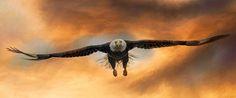 """""""Breakthrough"""" #eagle #baldeagle #eagleart #art #panorama"""