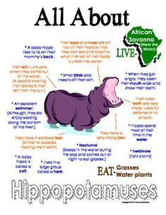 My All About Hippopotamuses Book - African Animal Unit Study from Courtney… Hippo Facts, Facts About Hippos, Hippopotamus For Christmas, Fun Facts For Kids, Baby Hippo, Animal Science, African Animals, African Safari, All About Animals
