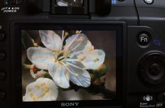 Camera - photography - summer - blossoms
