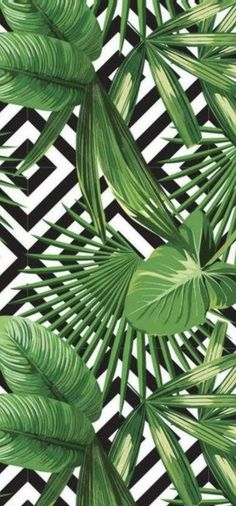 Summer Wallpaper, Plant Leaves, Plants, Plant, Planets
