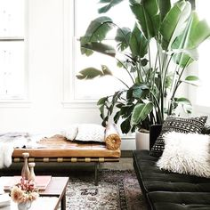 Gotta lotta  for this eclectic living room featuring this dreamy #daybed