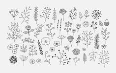 Embroidery Pattern from Freehand Decor PNG Pack by Lera Efremova on Creative Market. Doodle Art, Doodle Drawings, Flower Drawings, Floral Drawing, Drawing Flowers, Making Wedding Invitations, Wedding Stationery, Floral Doodle, Illustration Blume