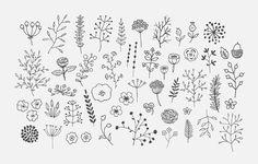 Les Flores