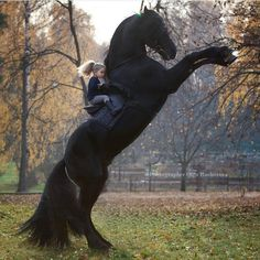 Largest Horse Breeds in the world How is it possible this? Most Beautiful Horses, All The Pretty Horses, Animals Beautiful, Beautiful Beautiful, Cute Horses, Horse Love, Black Horses, Wild Horses, Horse Photos