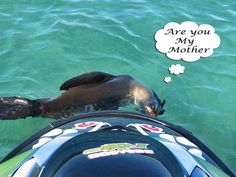 Seadoo RXP With a seal pup - Plimmerton Are You My Mother, Seal Pup, Toys For Boys, Seals, Lions, You And I, Lion, You And Me, Seal