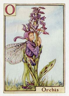 This beautiful Orchis Alphabet Flower Fairy Vintage Print by Cicely Mary Barker was printed c.1940 and is an original book plate from an early Flower Fairy book. Cicely Barker created 168 flower fairy illustrations in total for her many books.