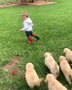 These Golden Retriever puppies ganging up on a kid - aww Cute Funny Animals, Cute Baby Animals, Animals And Pets, Super Cute Animals, Baby Puppies, Cute Puppies, Cute Dogs, Dog Baby, Funny Babies