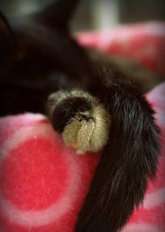 Tortie girl getting her beauty sleep <3