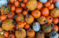 Fall and pumpkins! Photo Editing, Royalty Free Stock Photos, Autumn Soup, Fall Pumpkins, Pictures, Type 3, Image, Theater, Thanksgiving