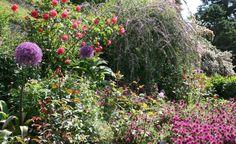 Ein Garten für Vögel und Nützlinge -  Man braucht keinen großen Bio-Garten, um Tiere anzulocken. Mit diesen attraktiven Blütenpflanzen können Sie auch auf kleinem Raum ein Zuhause für Vögel und Nützlinge schaffen.
