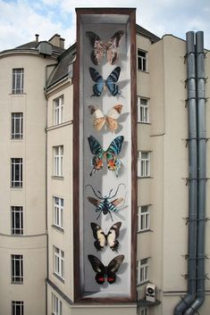 Painted on the wall: butterfly exhibits including a showcase with a effect - Street-Art (Murals, Graffiti, Kunst, Installationen) - 3d Street Art, Murals Street Art, Urban Street Art, Best Street Art, Amazing Street Art, Street Art Graffiti, Street Artists, Amazing Art, Graffiti Kunst