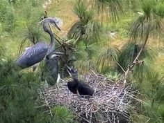 Community-led Conservation of Critically Endangered White-bellied Heron in Bhutan Website: www.rspnbhutan.org