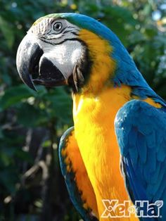 Fauna at Xel Há, Riviera Maya, México