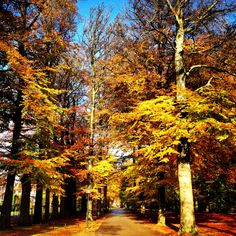Doorn, The Netherlands. There is gold in the air.