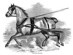 Beautiful Harness Horse ~ Free Vintage Clip Art