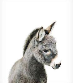 Baby Donkey Print Farm Animal Nursery The Crown Print .- Baby Donkey Print Farm Animal Nursery The Crown Prints - Cute Baby Animals, Animals And Pets, Funny Animals, Animals Kissing, Cutest Animals, Animal Memes, Farm Animal Nursery, Farm Nursery, Woodland Nursery
