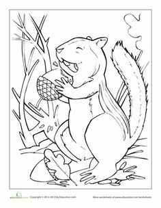 chipmunk coloring page - Realistic Chipmunk Coloring Pages