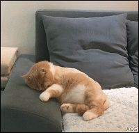 ACG • CAT GIF • Weird cat sleeping on couch dreaming trembling jumping and sleeping again OMG!