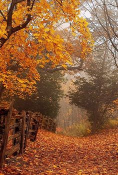 Back Country  - #Autumn