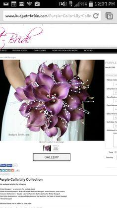 Purple Cala Lillies