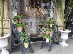 Conociendo un coqueto local de plantas en Londres