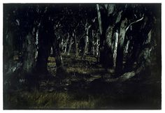 Bill Henson, landscapes at night are evocative Deep Ecology, Appropriation Art, Dark Landscape, Edward Steichen, Art Object, Paper Size, Night Life, Carpe Noctem, Bloodborne
