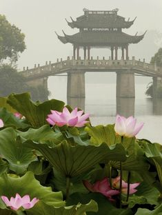 Su Di Bridge on West Lake (HANGZHOU, CHINA).  The Lotus flowers in the foreground are part of the Quyuan Garden, which features more than 200 species of lotus flowers growing in five ponds.