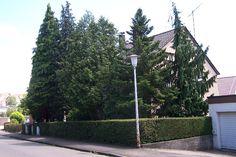 vorgartengigantismus_vorgarten_bepflanzung_immergruene_koniferen_begruenung_wald.jpg 875×583 pixels