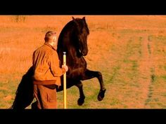 Into The Wild; Horse And Man - Klaus Hempfling in liberty play with the very high spirited PRE stallion Habanero - this is the dream of being with horses! Beautiful Horses, Simply Beautiful, Black Stallion, Ferdinand, Wild Horses, Liberty, Moose Art, Play, Youtube