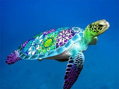 Hawaiian sea turtle with stained glass shell made in Photoshop Do not use for commercial purposes. Sea Turtle Painting, Sea Turtle Art, Turtle Love, Green Turtle, Mandala Turtle, Pictures Of Turtles, Turtle Images, Baby Sea Turtles, Cute Turtles