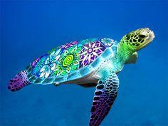 Sea turtle. - Imgur