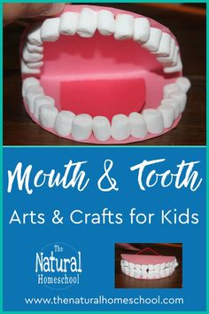 Kids can learn the human teeth names while having fun Preschool At Home, Preschool Lessons, Preschool Activities, Indoor Activities, Projects For Kids, Crafts For Kids, Art Projects, Fine Motor Activities For Kids, Human Teeth