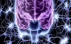 Найден ключ к воссозданию человеческого мозга?