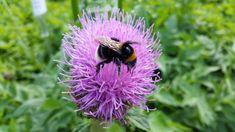 Mehiläisiä pihalla