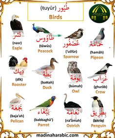 Learn English Words, English Lessons, English Language Course, Learn Arabic Online, Islam Facts, Arabic Language, Learning Arabic, Vocabulary, Success