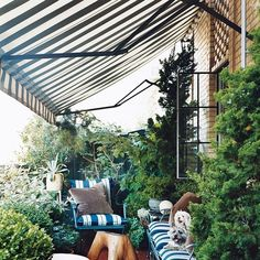 Contemporary Outdoor Space by Aero Studios -- On the terrace of designer Thomas O'Brien's New York home, statuesque greenery draws the eye upward. [Small Patio ideas that ake use of every inch of space]]