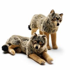 koesen-wolf-standing
