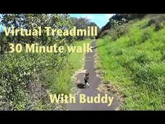 Virtual Treadmill 30 Minute Walk with Buddy the miniature Fox Terrier - YouTube