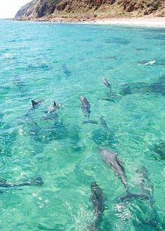 A pod of dolphins in the clear waters off the  North Coast of #Kangaroo Island  #South Australia