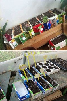 Using cardboard Juice Containers for seed starters Recycling, Diy Recycle, Container Gardening Vegetables, Vegetable Garden, Milk Carton Crafts, Home Crafts, Crafts For Kids, Theme Nature, Upcycled Crafts