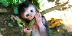 Zoos around the world are battling it out for the cutest newborn prima.co.uk