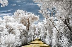Caminho Encantado
