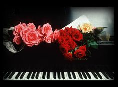 Valentines Day Websets with roses on a piano Thompson, Art Of Noise, Music Express, Piano Keys, Beautiful Gif, Rose Photos, Music Pictures, Love Rose, Music Photo