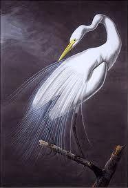 john james audubon birds